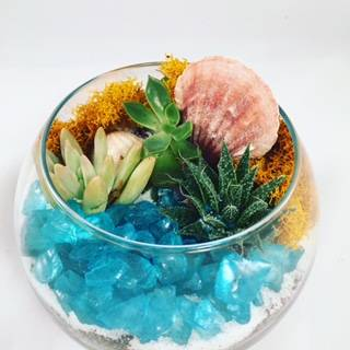 A Succulents with Sea Glass in Rose Bowl plant nite project by Yaymaker