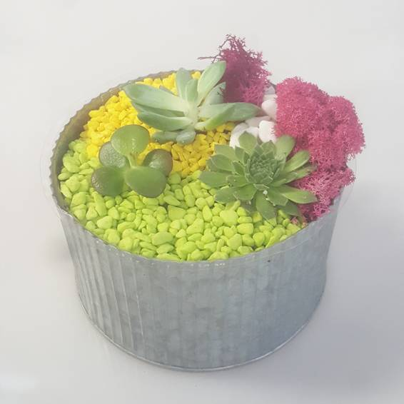 A Colorful Metal Planter with Succulents plant nite project by Yaymaker