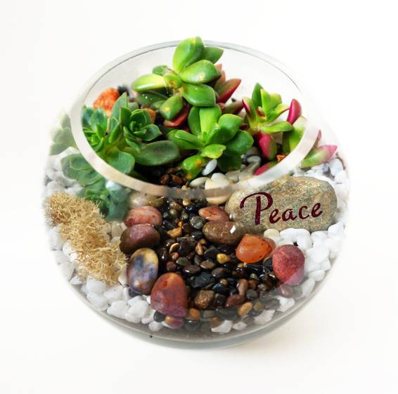 A Rose Bowl Succulent Terrarium WRiver Rocks and Peace Wish Rock plant nite project by Yaymaker