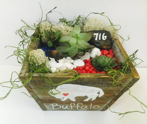 A Buffalo Pride Succulent Terrarium in Light Wood Tapered Square plant nite project by Yaymaker