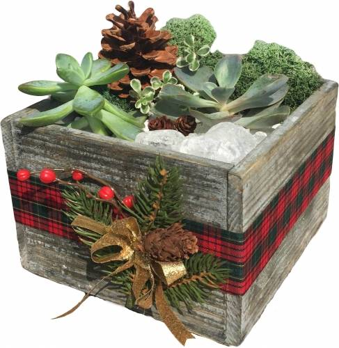 A Seasonal Succulent Rustic Square Wooden Terrarium plant nite project by Yaymaker