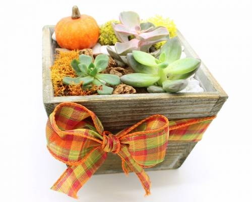 A Succulents in light wood tapered square w autumn ribbon plant nite project by Yaymaker