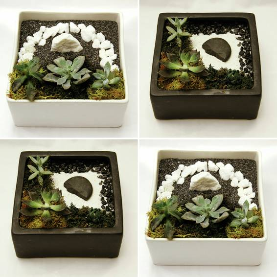 A Succulent Zen Garden in White or Black Ceramic Planter plant nite project by Yaymaker