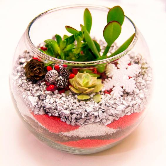 A Succulent Terrarium in Rose Bowl  Silver Christmas Sand Art plant nite project by Yaymaker