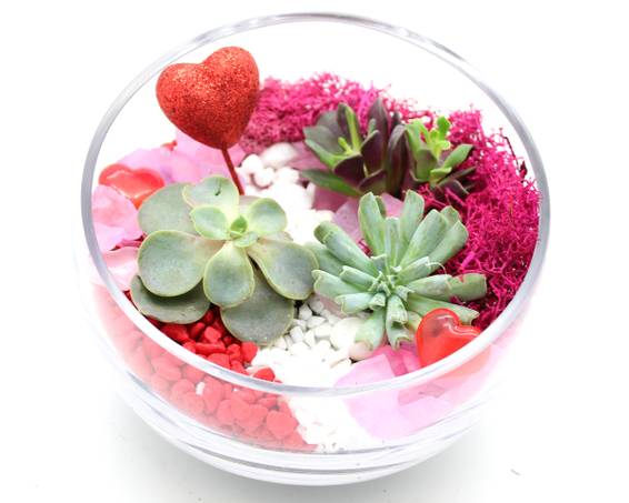 A Succulents in Slope Bowl  Valentine Hearts plant nite project by Yaymaker