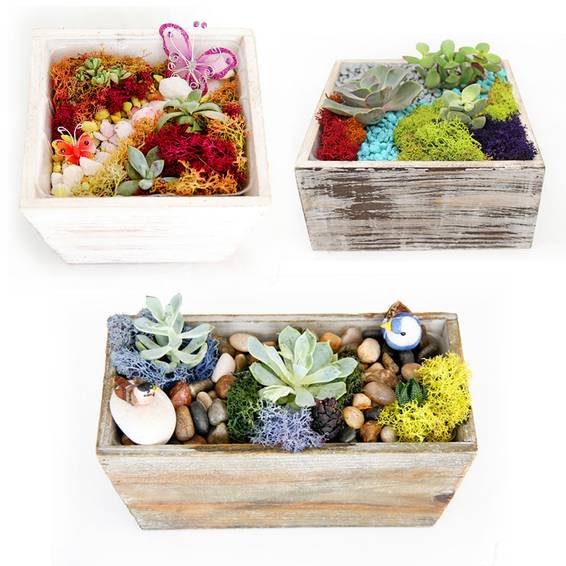 A Succulent Terrarium in Wooden Containers Mashup plant nite project by Yaymaker