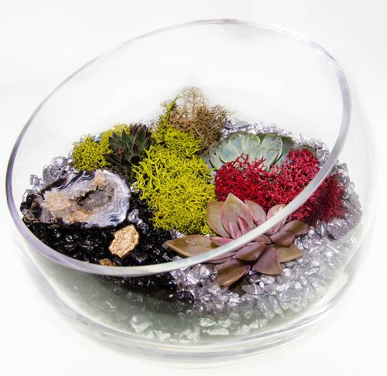 A Succulent Geode Terrarium in Sloped Bowl plant nite project by Yaymaker