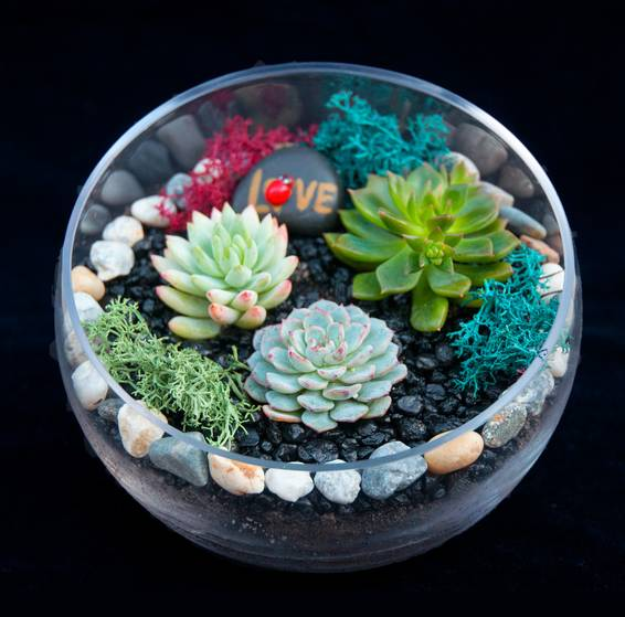 A Beautiful Succulent Slope Bowl plant nite project by Yaymaker