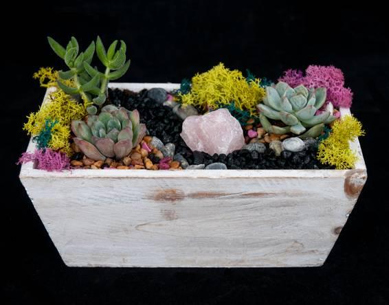 A Rose Quartz Succulent Vintage Garden plant nite project by Yaymaker