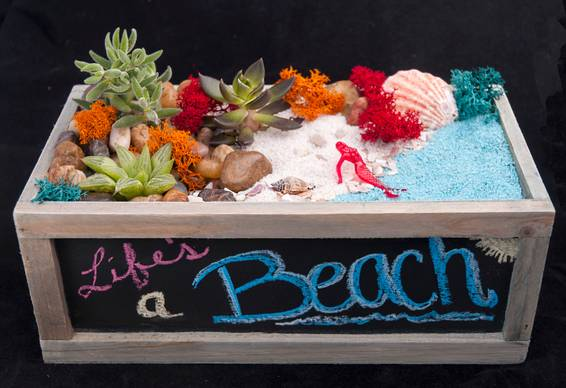 A Lifes A Beach plant nite project by Yaymaker