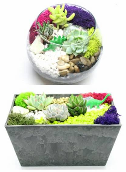 A Choice Of Poly Planter or Glass Bowl Container with Dino plant nite project by Yaymaker
