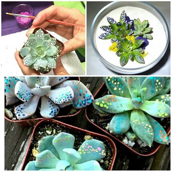 A Paint and Plant Succulent Event plant nite project by Yaymaker