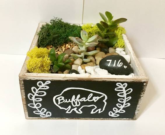 A Buffalo Love Succulent Terrarium in Distressed Wood Square w Chalkboard plant nite project by Yaymaker