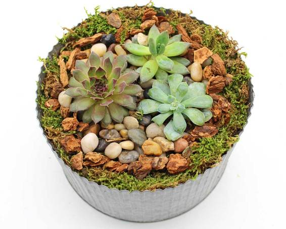 A Natural Succulent Terrarium in Corrugated Tin Pot plant nite project by Yaymaker