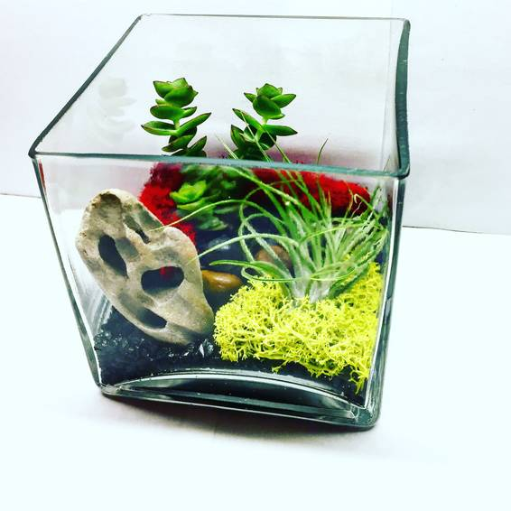 A Square Glass Driftwood Terrarium with Airplant and Succulent plant nite project by Yaymaker