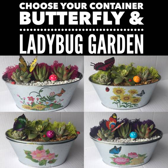 A Choose Your Container Butterfly  Ladybug Garden Terrarium plant nite project by Yaymaker