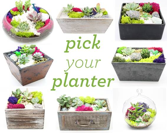 A Pick Your Planter Succulents Assortment for Choosing plant nite project by Yaymaker