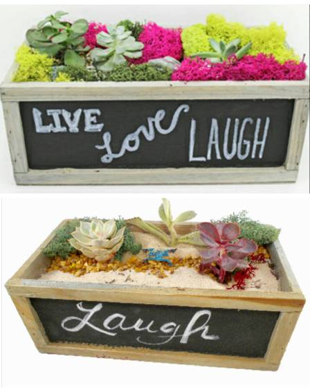 A Succulent Garden in Chalkboard Wood Box  You Choose the Design plant nite project by Yaymaker