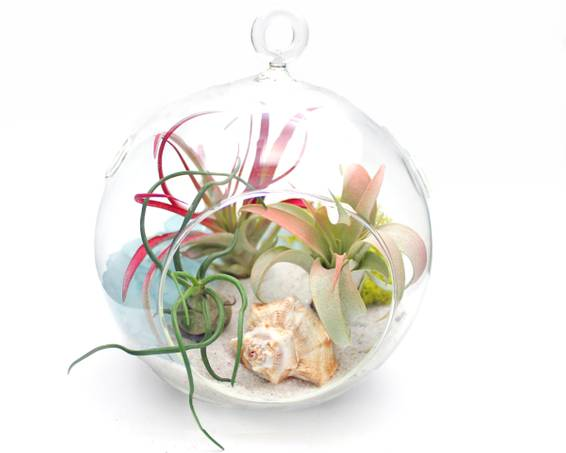 A Seaside Air Plants in Hanging Globe plant nite project by Yaymaker