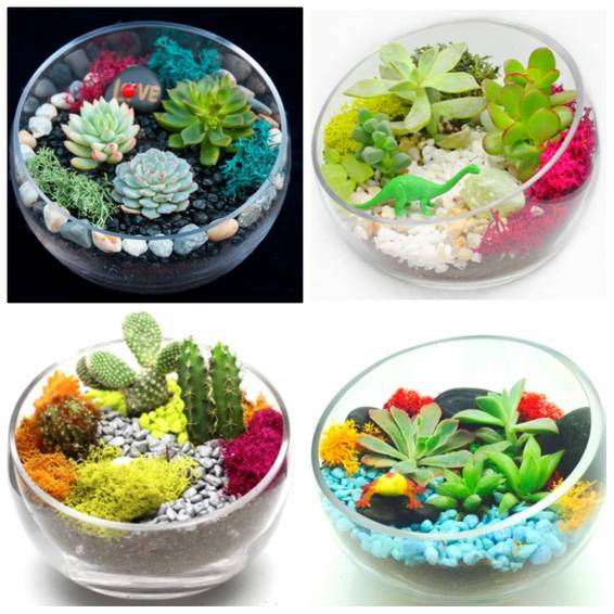 A Choose the Design  Succulent Garden in Half Cut Bowl plant nite project by Yaymaker
