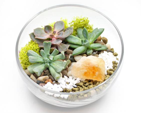 A Succulents in Slope Bowl with Citrine Crystal plant nite project by Yaymaker