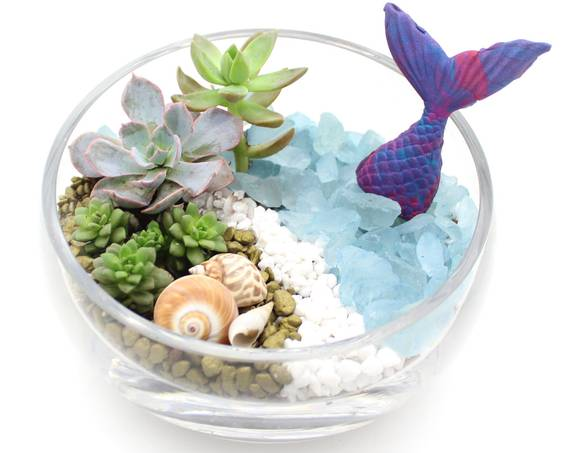 A Mermaid Glimpse  Succulents in Slope Bowl plant nite project by Yaymaker