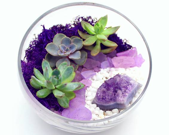 A Succulents in Slope Bowl with Amethyst Cluster plant nite project by Yaymaker
