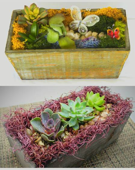 A Succulent Butterfly Garden in Rustic Wood Box  Pick the Design plant nite project by Yaymaker