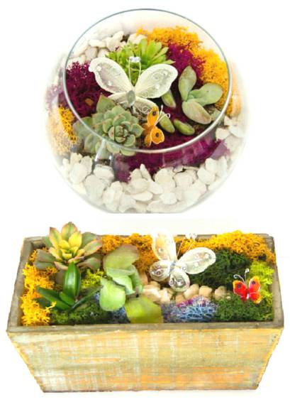 A Succulent Butterfly Garden You Pick the Design plant nite project by Yaymaker