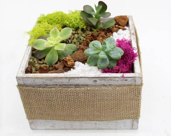 A Succulents in White Wood Box with Burlap Ribbon plant nite project by Yaymaker