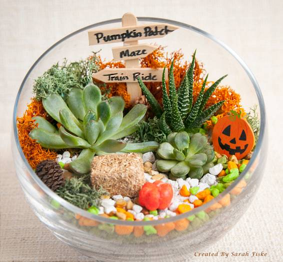 A Pumpkin Patch in Slope Bowl plant nite project by Yaymaker