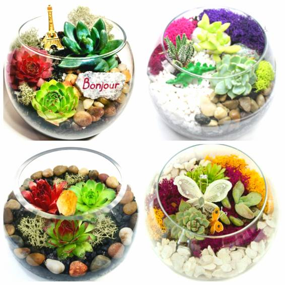 A Create a Succulent Terrarium You Pick the Design plant nite project by Yaymaker