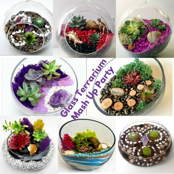 A Glass Terrarium Mash Up Party Choose between Slope Globe Hanging Globe or Lily Bowl plant nite project by Yaymaker