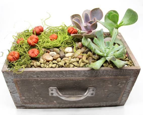 A Pumpkin Patch Succulents in Rustic Drawer plant nite project by Yaymaker