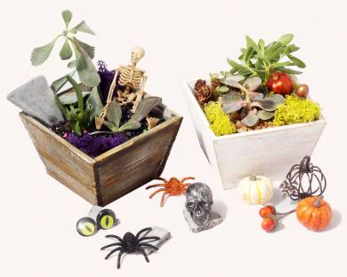 A Fall or Fright plant nite project by Yaymaker