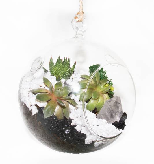 A Succulent Terrarium with Clear Quartz in Hanging Globe plant nite project by Yaymaker