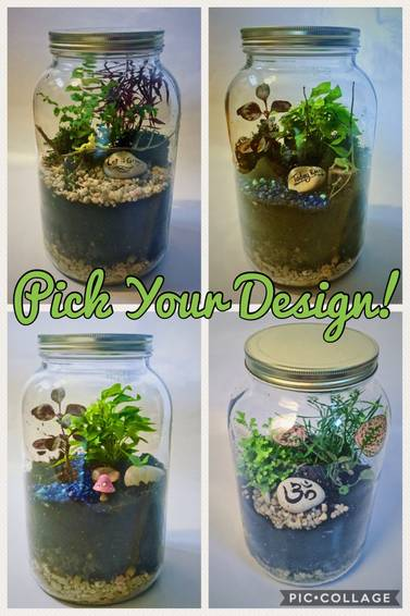 A Tropical Garden in Gallon Glass Jar  Pick Your Own plant nite project by Yaymaker