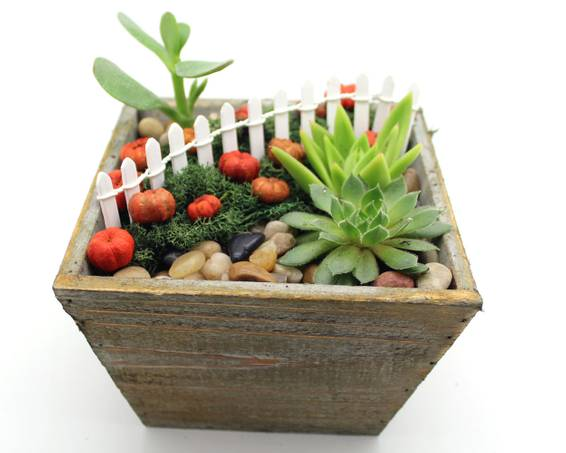 A Pumpkin Patch Succulents in Light Wood Square Planter plant nite project by Yaymaker