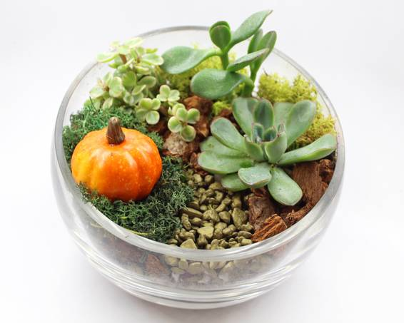 A Succulents in Slope Bowl with Fall Pumpkin plant nite project by Yaymaker