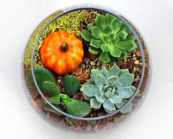 A Succulents in Rose Bowl with Fall Pumpkin plant nite project by Yaymaker