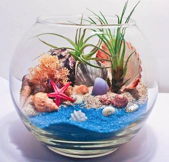 A Under the Sea  Shells air plant Rose bowl plant nite project by Yaymaker