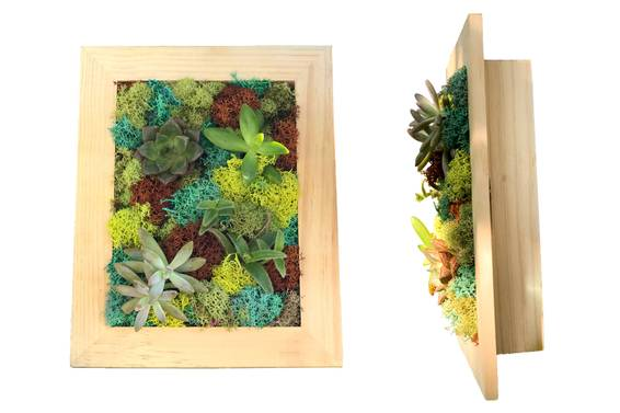 A Succulent Shadowbox plant nite project by Yaymaker