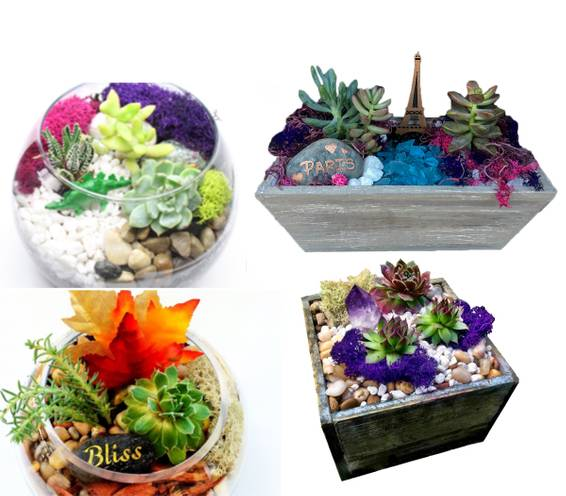 A Choose Your Theme Fall  Dinosaur Crystal  Paris plant nite project by Yaymaker