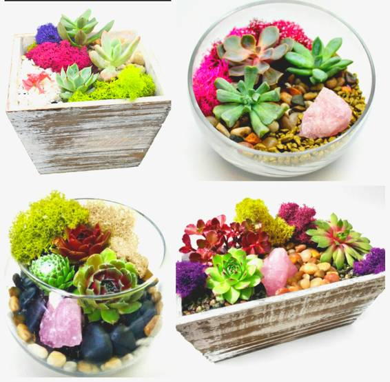 A Succulent Garden or Terrarium with Rose Quartz Crystal You Pick the Design plant nite project by Yaymaker