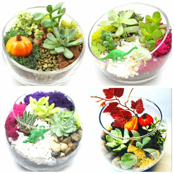 A Succulent Garden in Glass Container Fall and Classic Dino Design Options plant nite project by Yaymaker