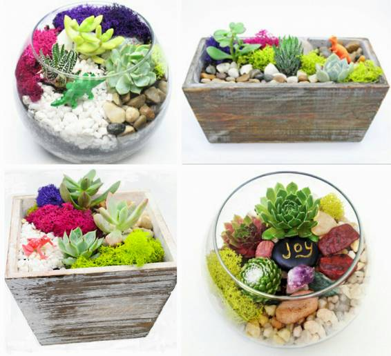 A Succulent Garden in Wood Box or Glass Container You Pick the Design plant nite project by Yaymaker
