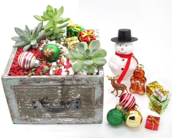 A Create Your Christmas Drawer w assorted seasonal decoration choices plant nite project by Yaymaker