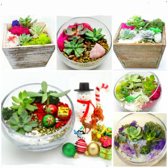 A Pick a Succulent Garden Box or Glass Terrarium Design Classic Design Options and Bonus Holiday Decorations plant nite project by Yaymaker