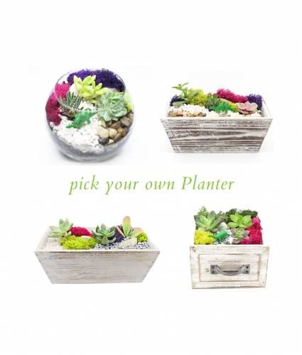 A Pick Your Own Planter plant nite project by Yaymaker