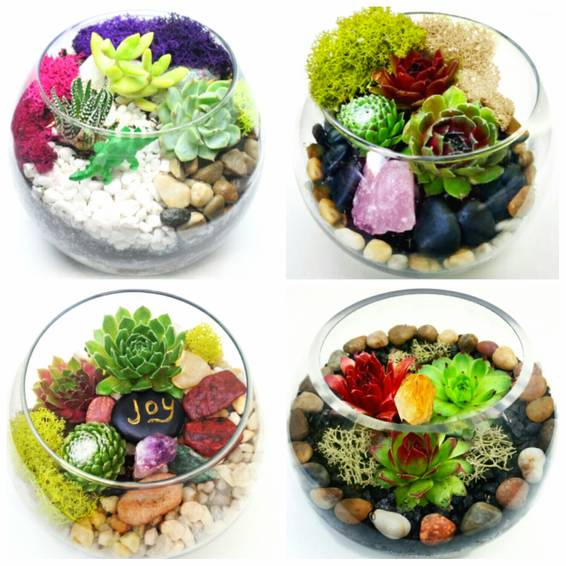 A Design Your Own Succulent Garden in Glass Container plant nite project by Yaymaker